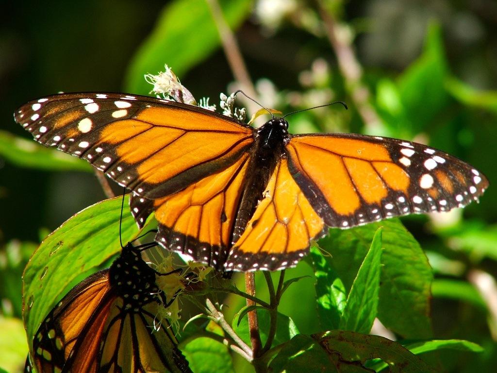 storie-di-immaginaria-realtà-monarca