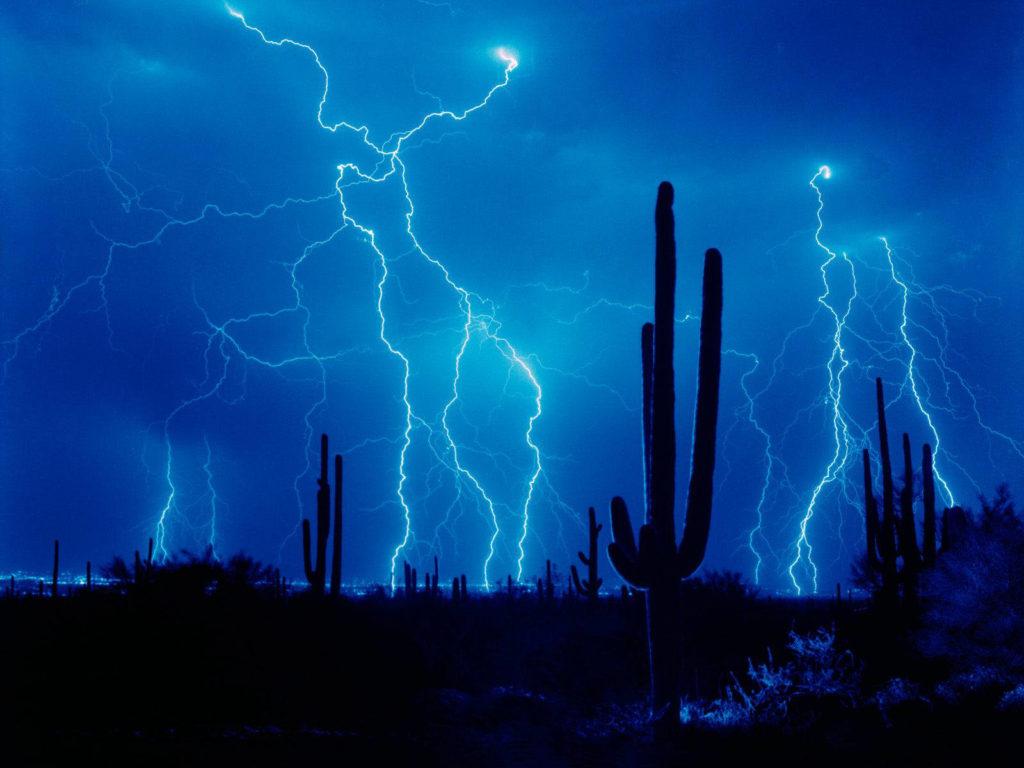 Cactus & Fulmini