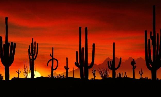 Tramonto nel deserto di Sonora